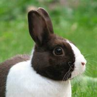 Oreo the Rabbit