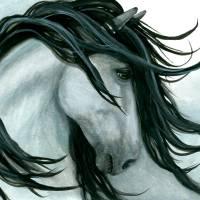 """""""Majestic Grey Horse"""" by AmyLynBihrle"""