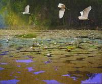 water lilies and egrets