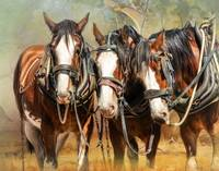 Clydesdale Conversation