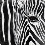 """""""Zebra Eye"""" by HaileyWatermedia"""
