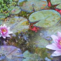 Water Lily Leaves and Flowers by Faye Cummings