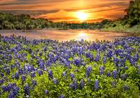 Bluebonnet Sunset