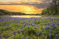 End of a Bluebonnet Day