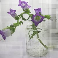 ORL-4039-1 Clear Mason Jar with Flowers