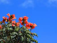 Red Flowers in a Tree