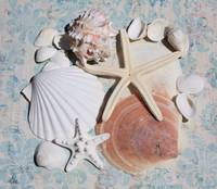 ORL-5225-3 Assorted Sea Shells