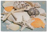 ORL-5245-1 Sea Shell Beach Decor. Hawaiian Sea bre