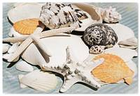 ORL-5245-2 Sea Shell Beach Decor. Hawaiian Sea bre