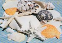 ORL-5245-4 Sea Shell Beach Decor. Hawaiian Sea bre