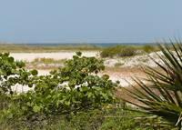 Florida Beach Landscape by Carol Groenen