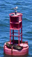 Bell Buoy Blues