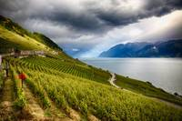 Terraced Vineyard Overlooking Lake Geneva, Switzer