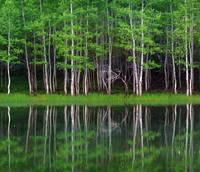 Lakeshore Panorama (Multi-Panel Center - 2 of 3) by David Kocherhans
