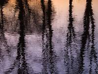 Lake reflecting Trees at sunset
