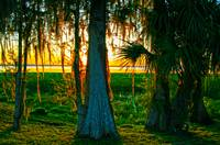 Sunset Through Spanish Moss
