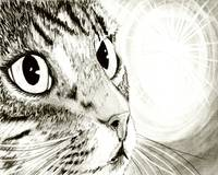 Fairy Light - Tabby Cat Drawing