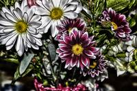 Red Flowers white daisy Grunge