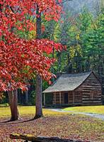 Autumn at The Carter Shields Cabin