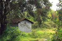 Shed in Eucalyptus Trees