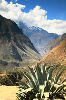 Blue Agave and Andes Mountains, Inca Trail, Peru