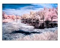 idlewild color ir