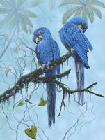 Griff_parrot_Hyacinth_macaw