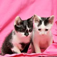 Two Cute Kittens
