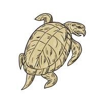 Ridley Turtle Drawing