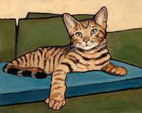 Bengal Cat Reclining