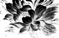 Expressive Black & White Abstract Floral A8816