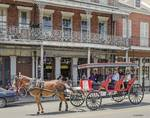 New Orleans Horse Carriage  by Allen Sheffield