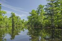 Cajun Swamp Reflections