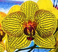 Yellow Orchid Bloom In Fauvism
