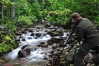 Photographing on Jackson Creek, Glacier Natl Park