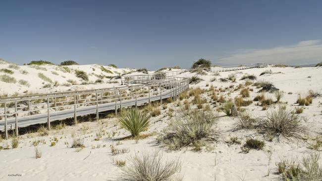 White Sands Dune Path Leads the Way