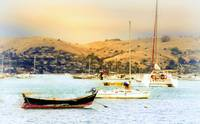 Sausalito Sailboats