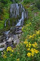 Vidae Falls & wildflowers, Crater Lake Natl Park