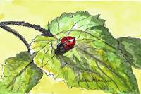 lady-bug-pen-and-wash