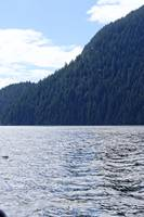 2016 Indian Arm Cruise 9 by Priscilla Turner