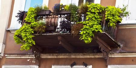 Balcony with pigeons