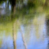 Spring Reflection Abstract by Karen Adams