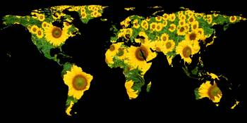 World Map Silhouette - Sunflowers