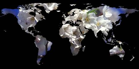 World Map Silhouette - Cherry Blossoms