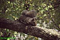 Sleepy Squirrel