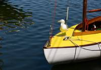 Just a Boat and a Gull