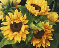Summer Sunflowers hi-res