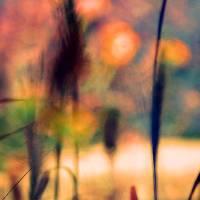 Autumn Dreams Abstract by Karen Adams