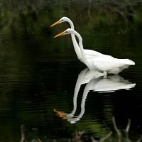 WaterBirds gallery