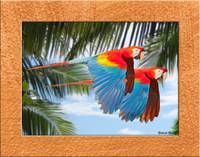 flying macaws 11x14